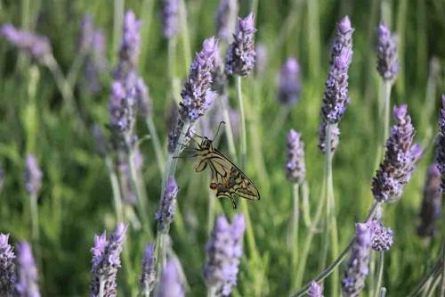 Fauna de Ecoherbes Park