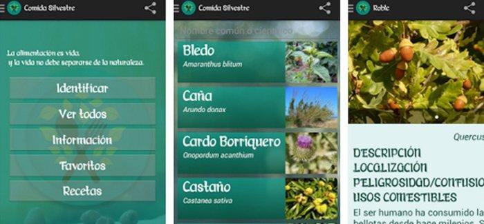 plantas silvestres comestibles, ecoherbes