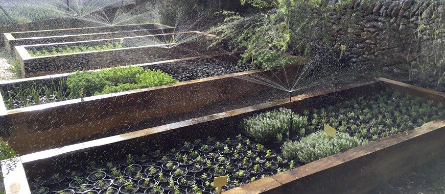 plantas medicinales, ecoherbes