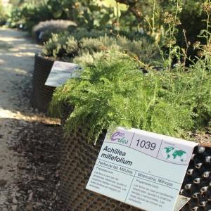 jardin botanico, ecoherbes