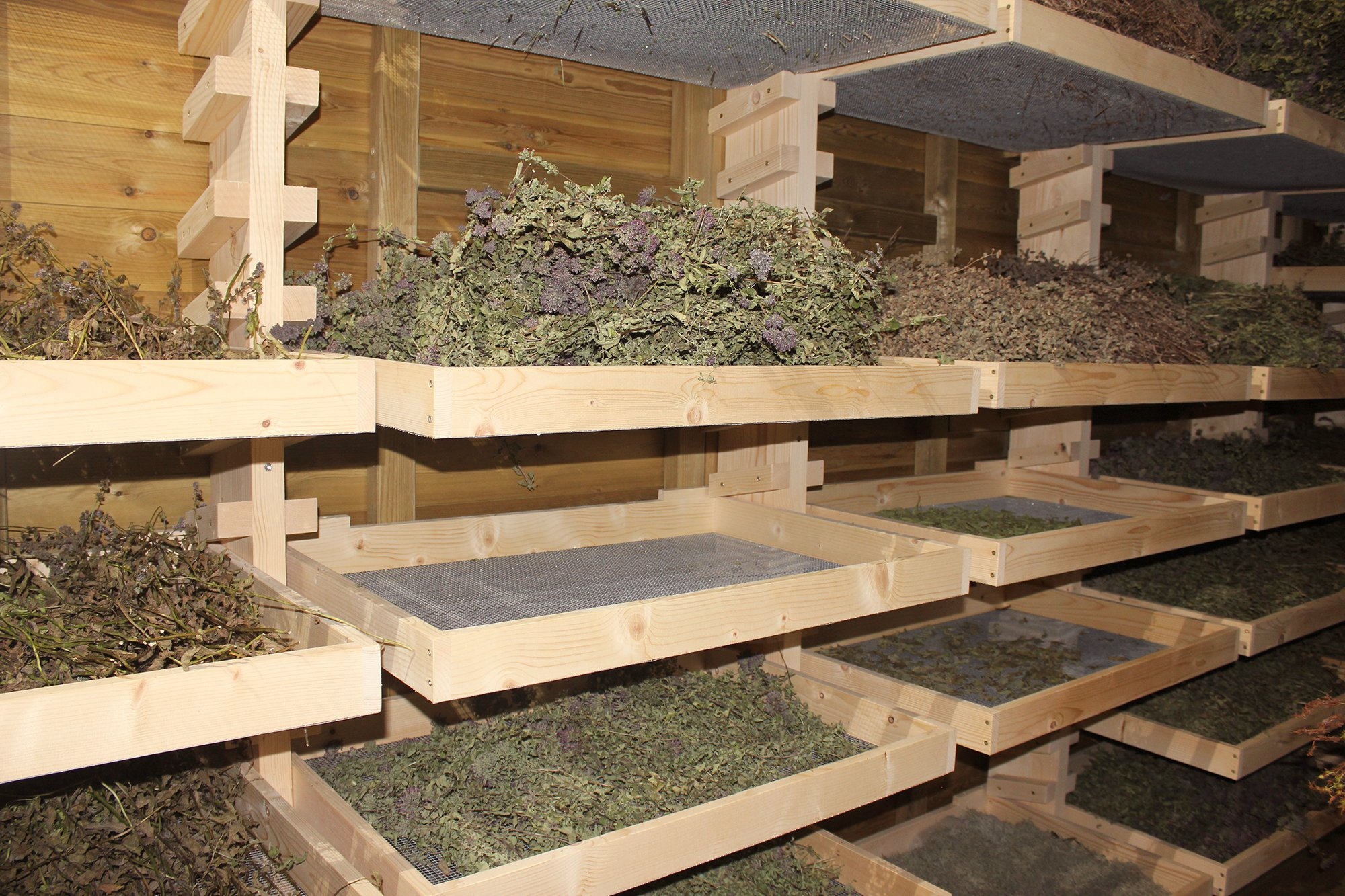 como secar hierbas aromaticas
