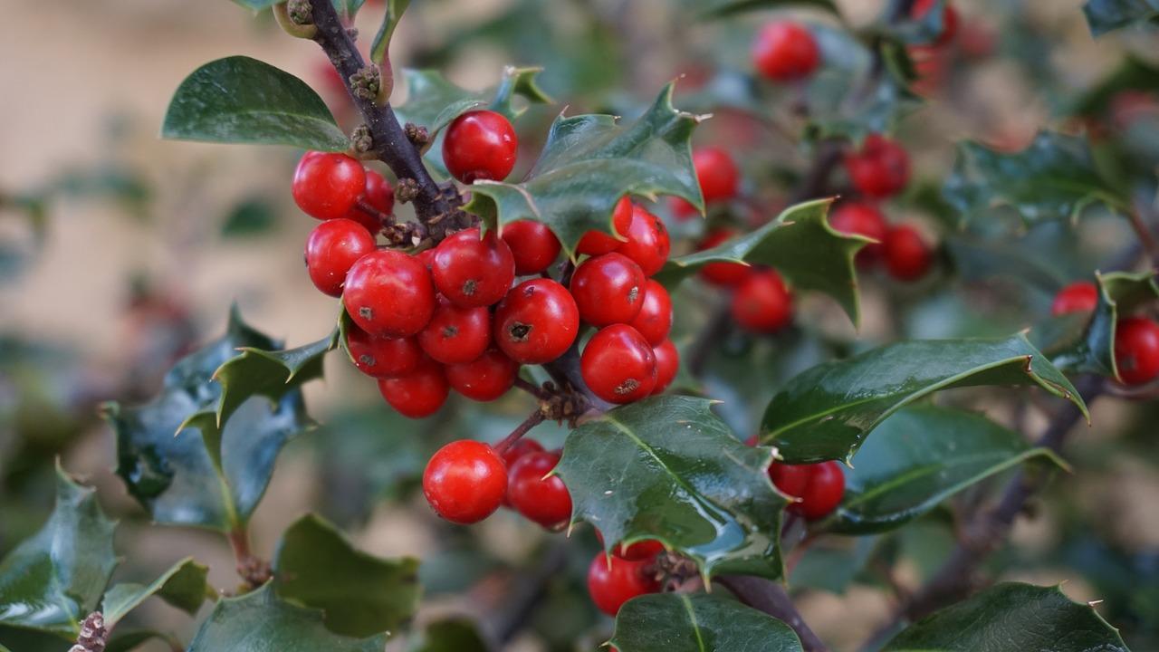 plantas de la tradición navideña