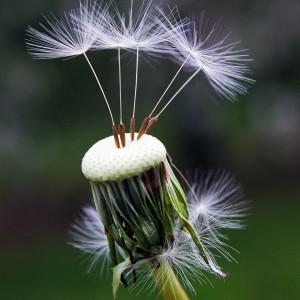 semillas ecologicas, ecoherbes