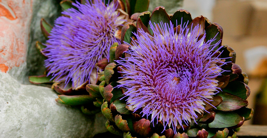plantas depurativas para el higado
