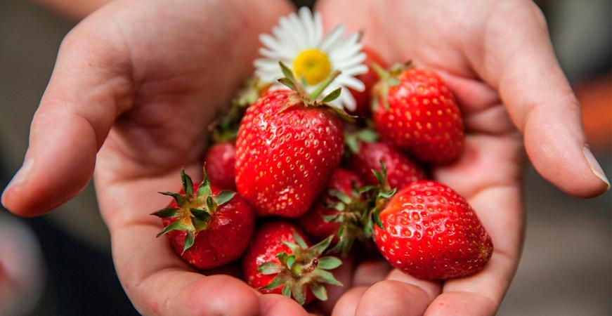 alimentos ecologicos fresas ecoherbes