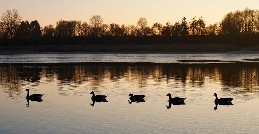 beneficios del turismo sostenible laguna con familia patos, ecoherbes