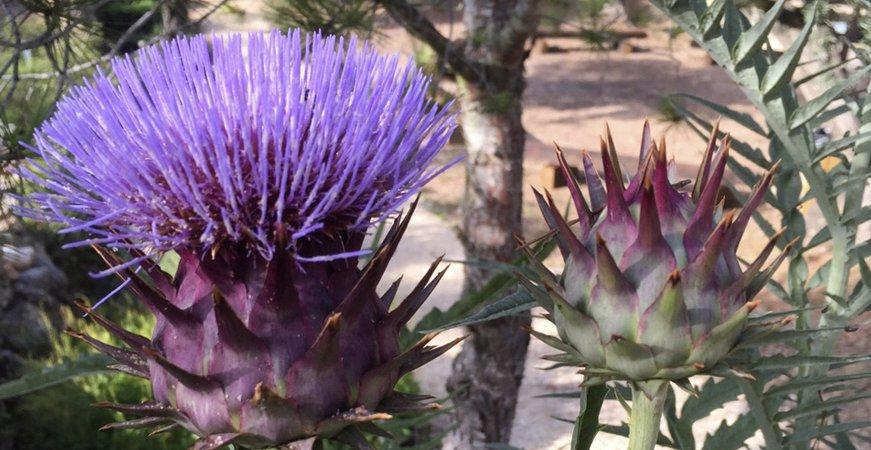 jardín botanico de plantas medicinales, ecoherbes park