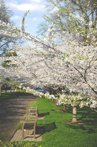 alergia primaveral, ecoherbes