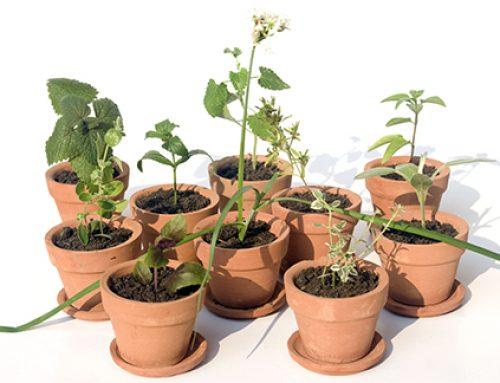 Tu pequeño jardín de plantas medicinales