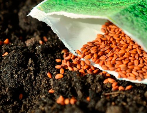 Semillas ecológicas o híbridas: ¿cuál es la diferencia?