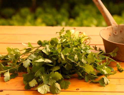 Vuelta al mundo en 5 platos a base de cilantro