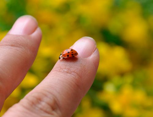 Astenia primaveral ¿qué es y por qué nos afecta?